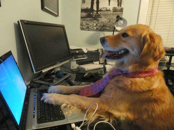 perro utilizando ordenador