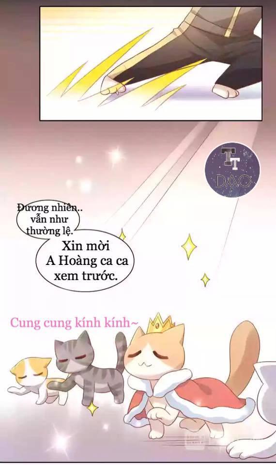 Dưới Móng Vuốt Mèo Chap 12 - Next Chap 13