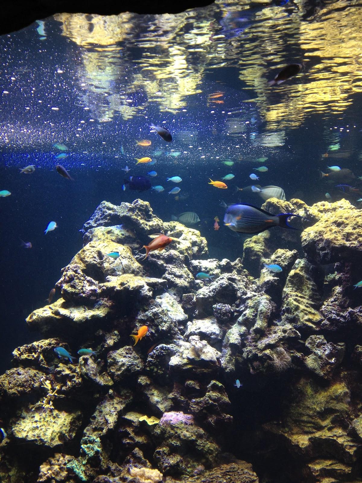 Art And Adventure Aquarium Va Beach
