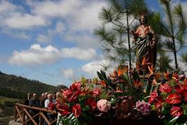 Pinares de Gran Canaria