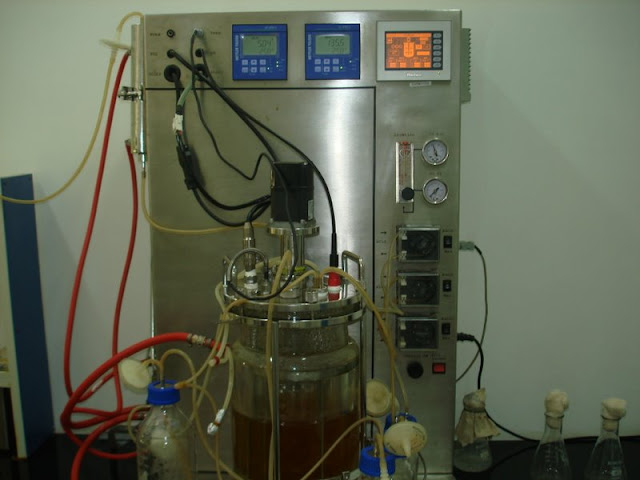 Fermentation media optimization