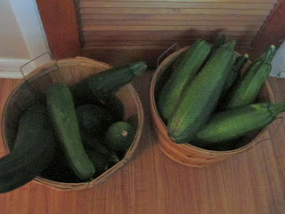 Two bountiful baskets of zucchini