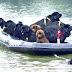 Στους περισσότερους σκύλους αρέσει η θάλασσα..