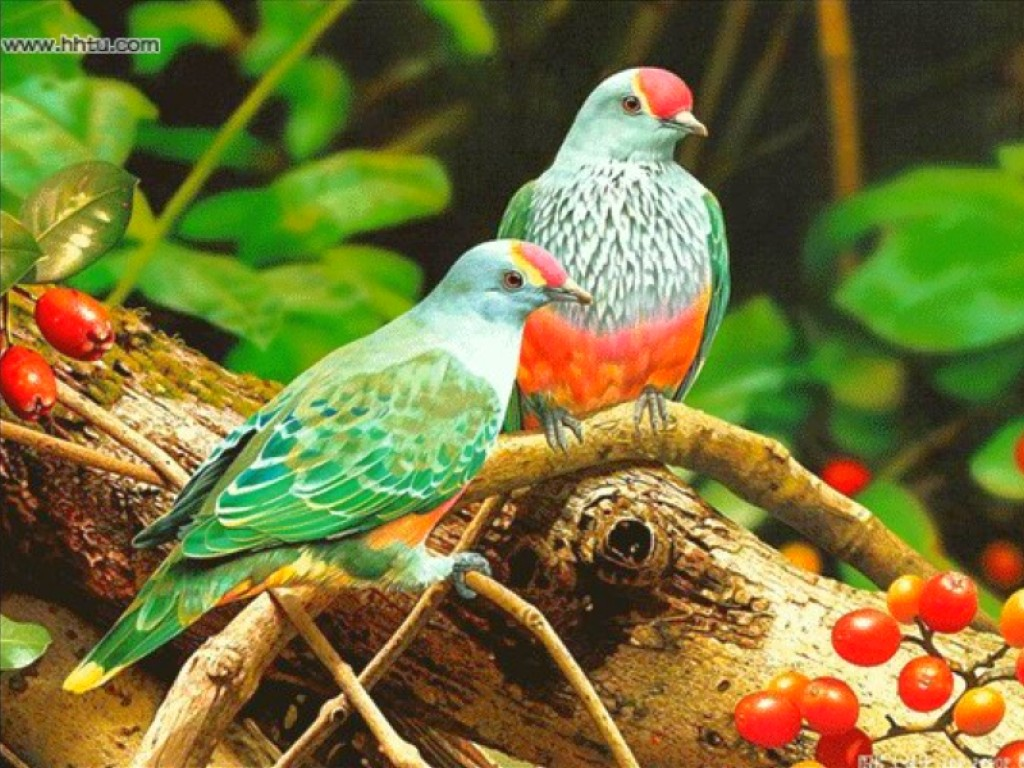 two colorful birds colorful bird blue birds twins colorful birds