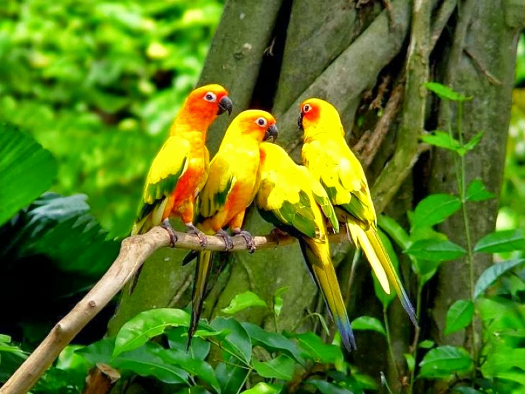 Most Of Us Think The Parrot As A Household Pet