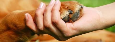 Гласот на животните