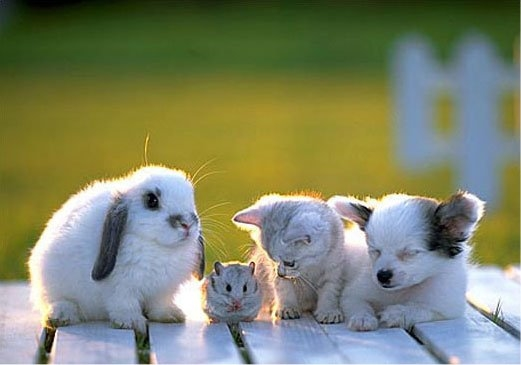Facebook Friendship Wallpapers Cute White Puppies