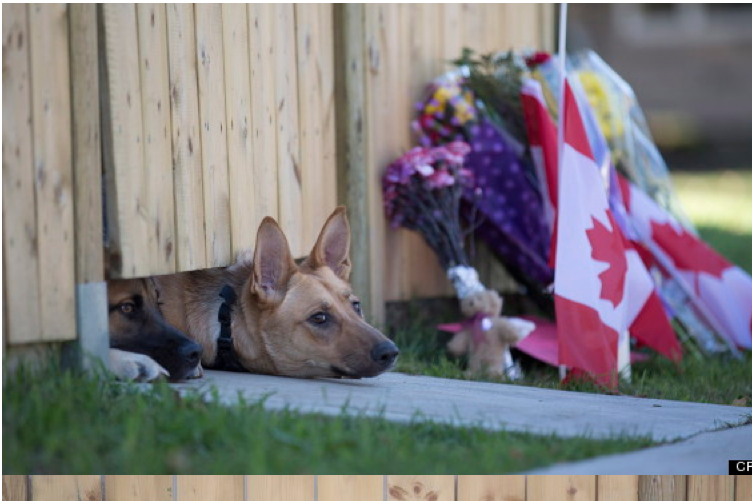 Nathan Cirillo's Dogs Wait For Master To Return (PHOTOS)