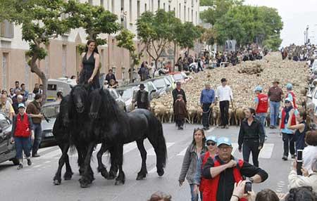 في ظاهرة غير مسبوقة شوارع مرسيليا ملئ خراف.