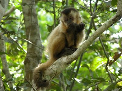Fauna da região do Rio Sucuri