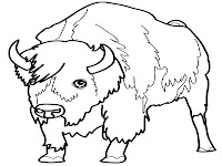 bison colouring sheet
