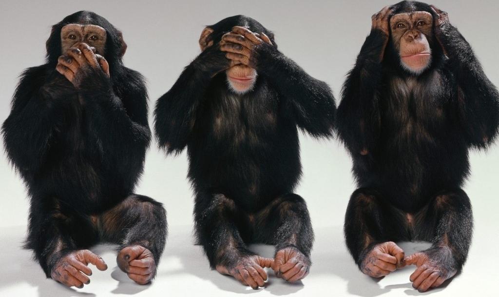 Foto de monos (No habla, no ve y no escucha)