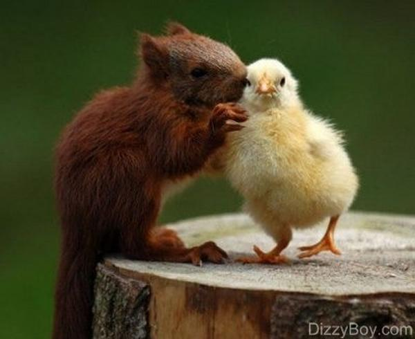 Most Amazing Friendly Squirrels Seen On www.coolpicturegallery.us