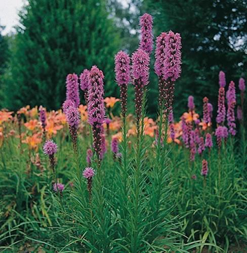 Piante e fiori settembre 2011 for Fiori pieno sole perenni