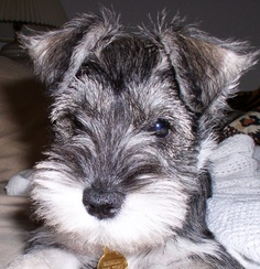 Top 10 Most Lovable Dog Breeds