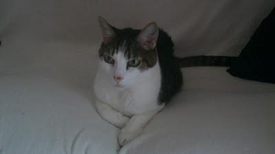 Gato Caetano descansa no sofá