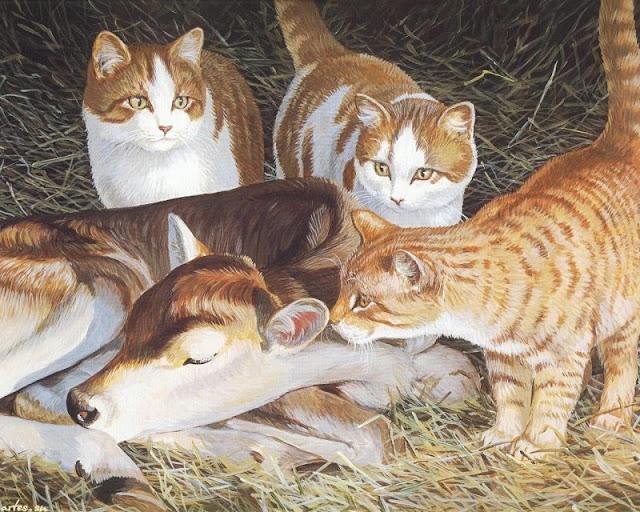 кошки и жеребёнок