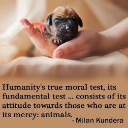 animal abuse quotes and sayings
