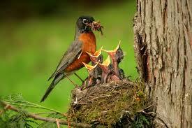 Funny Baby Birds
