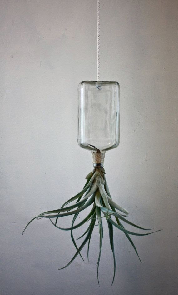 upcycled air plant container
