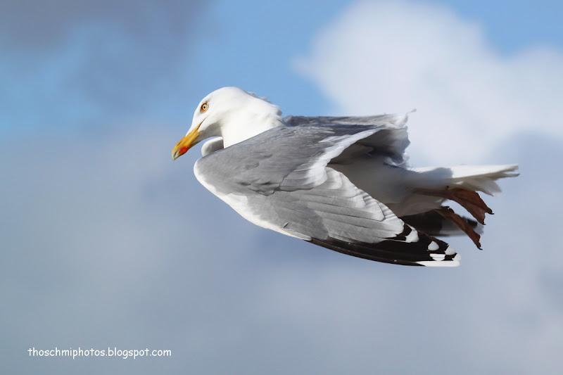 Sea Gulls title=