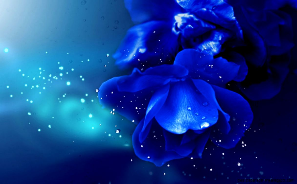 Blue Rose Desktop Wallpapers   HD Images New