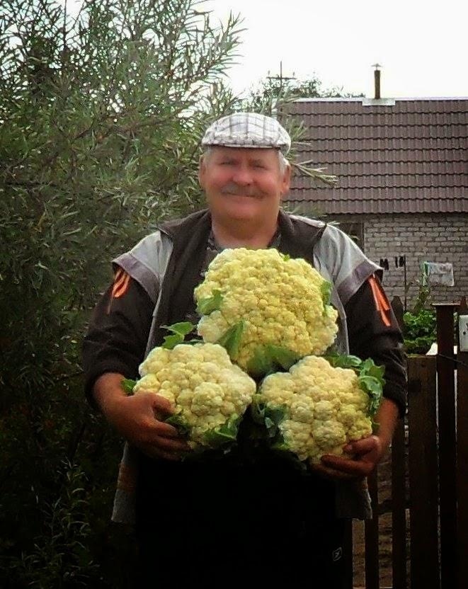Люблю капустку!