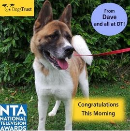 http://www.dogstrust.org.uk/rehoming/dog/1107122/dave#.Ut_4p7TFIr0