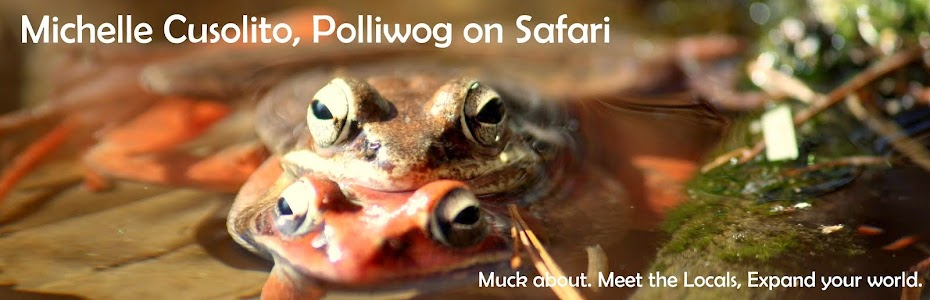 Polliwog on Safari