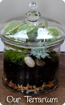 Our Terrarium