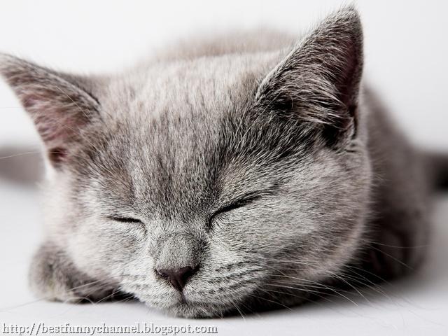 Beautiful sleeping cat.