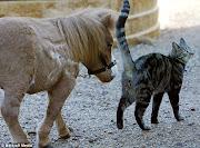 Cavalos e Gatos