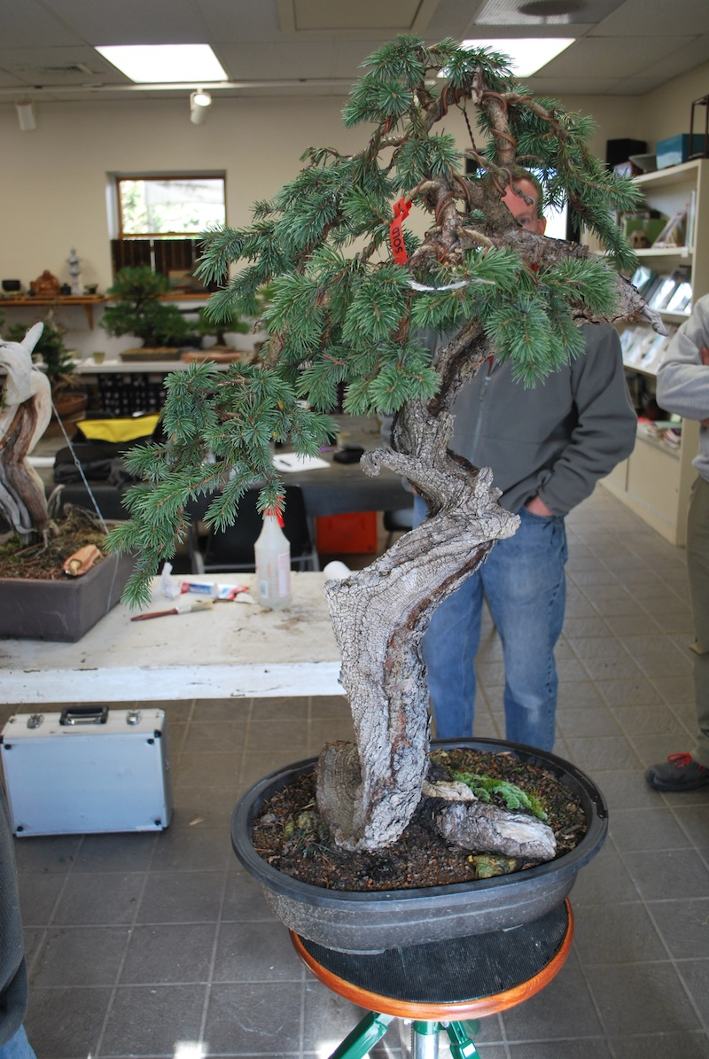 The Bonsai Society Of South Jersey Ryan Neil 3 Days At Natures