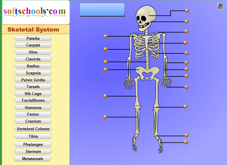 http://www.softschools.com/science/human_body/skeletal_system/