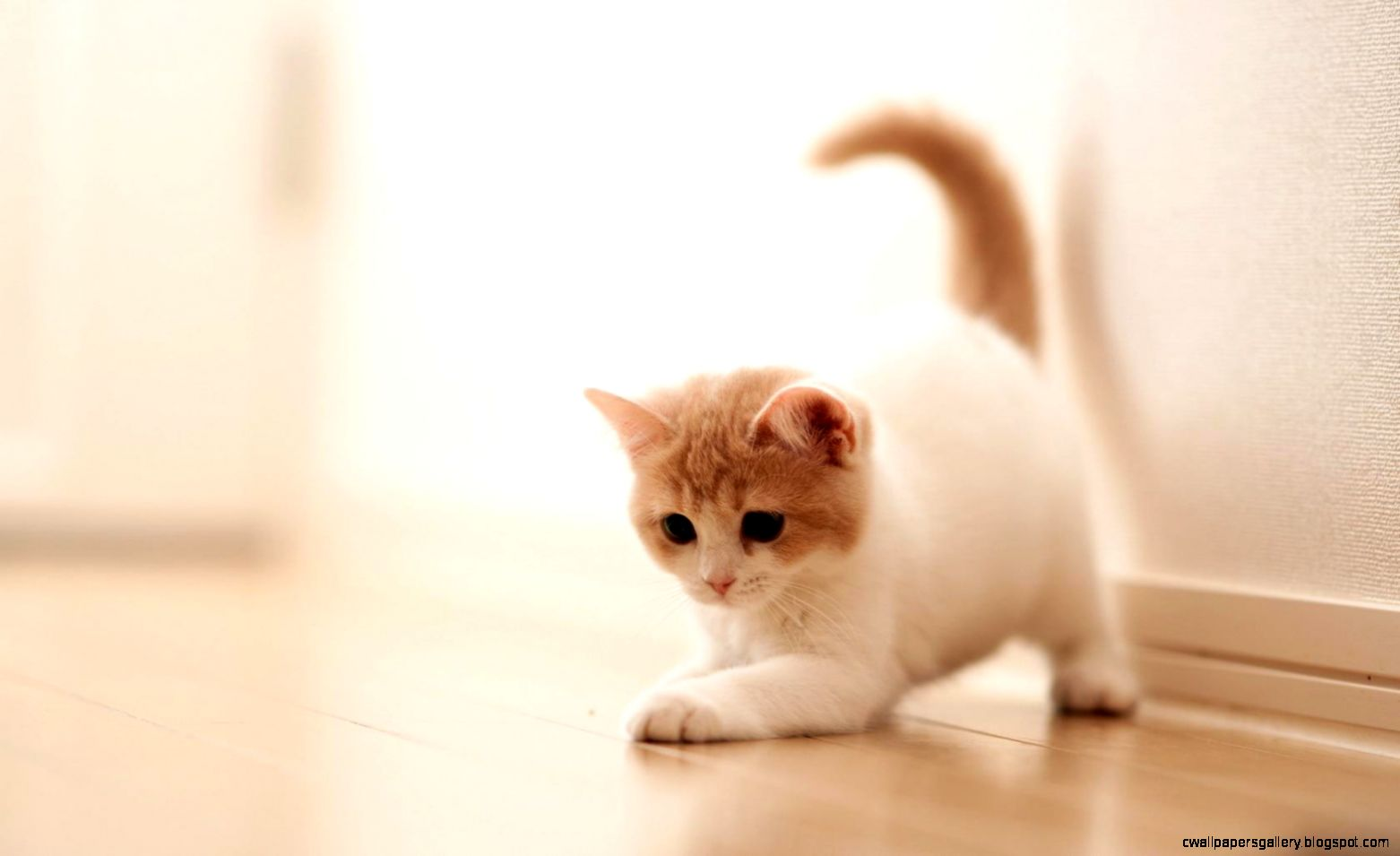 cute cat tumblr backgrounds | wallpapers gallery