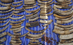 Elephant tusks seized in Thailand