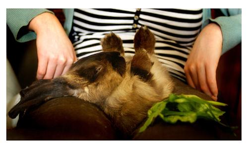A hypnotized bunny.