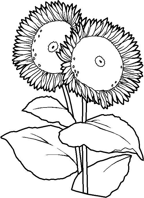 Pu I Si Voi Niste Fise  Imagini Sau Planse De Colorat Cu Flori