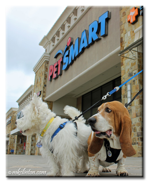 Bentley Basset and Pierre Westie in front of PetSmart