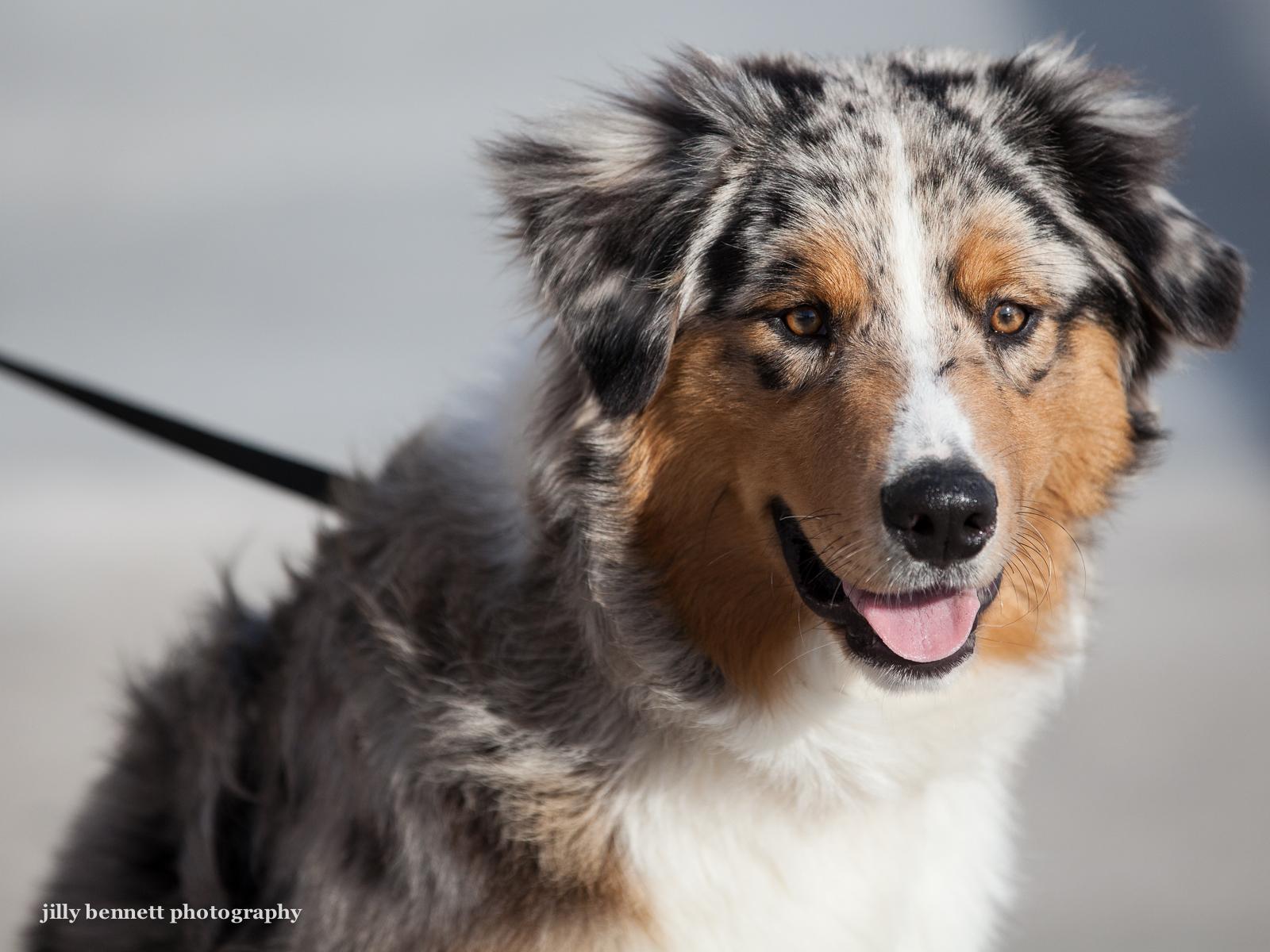 RIVIERA DOGS: Titus