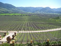 Viña Santa Cruz - En el Valle de Colchagua- CHILE