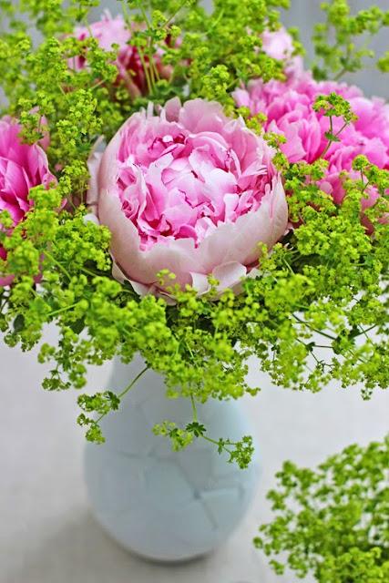 Pink Peonies, Alchemilla mollis, vases