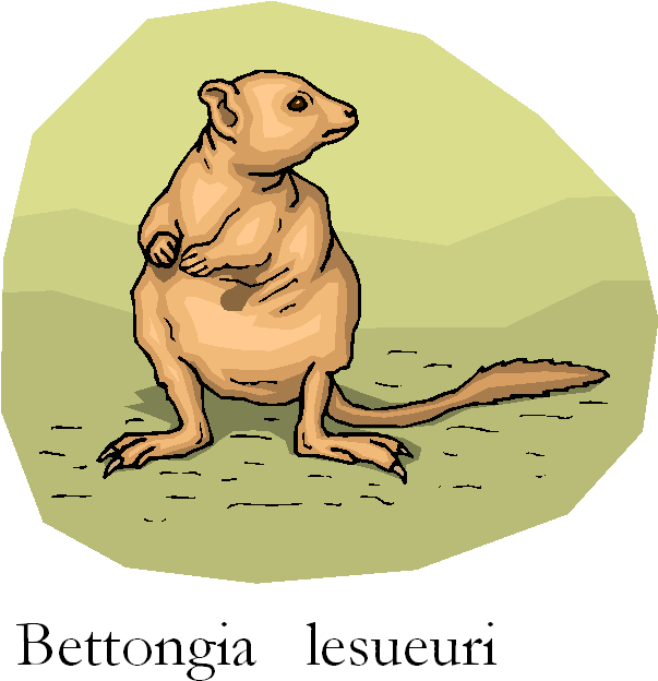 Burrowing Bettong Free Clipart