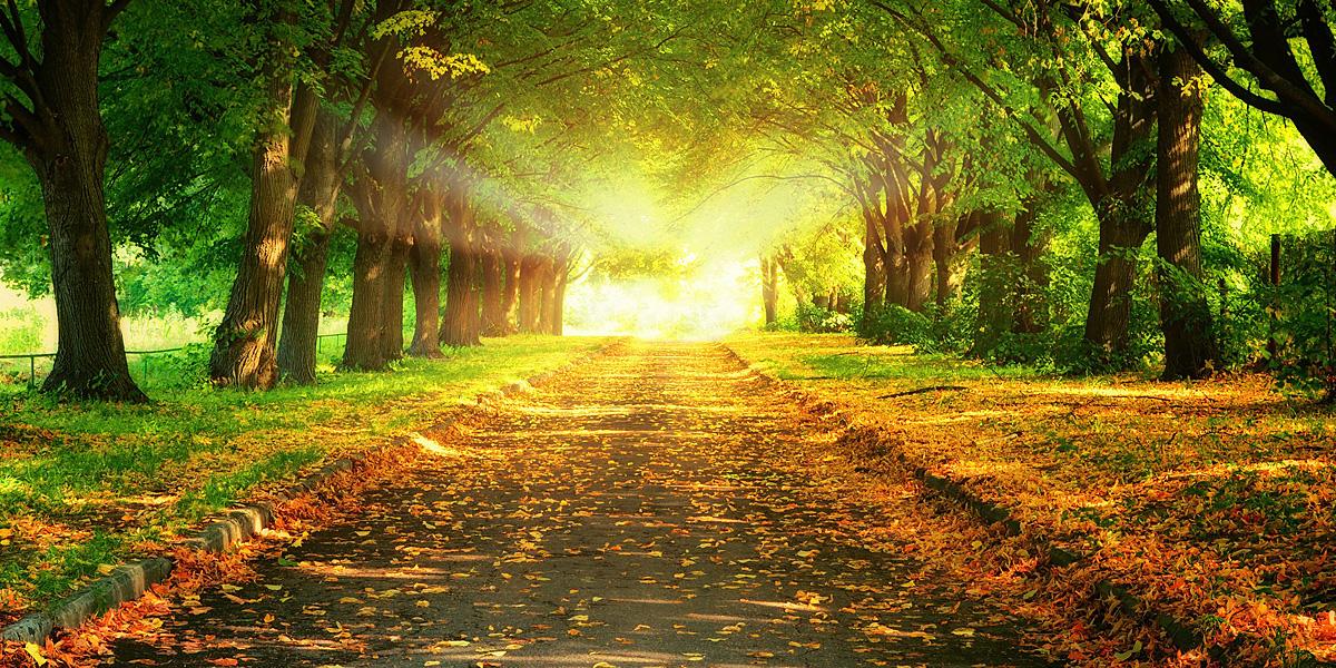 Leaves l 300+ Muhteşem HD Twitter Kapak Fotoğrafları