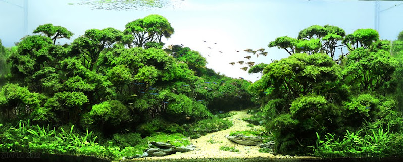 International Aquatic Plant Layout Contest - 2012 Grand Prize