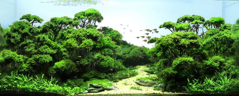 International Aquatic Plant Layout Contest - 2012 Grand Prize