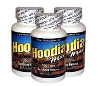 hoodia maxx