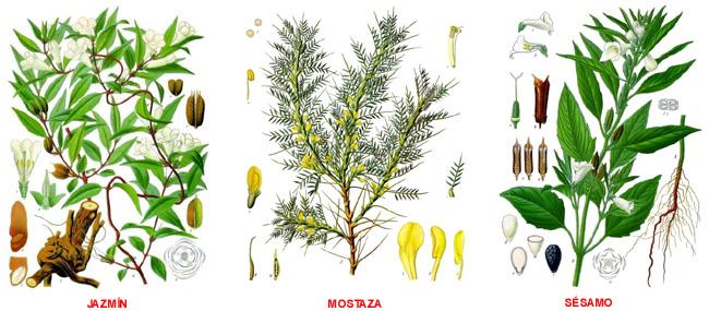 Jardin botanico for Tipos de hojas ornamentales