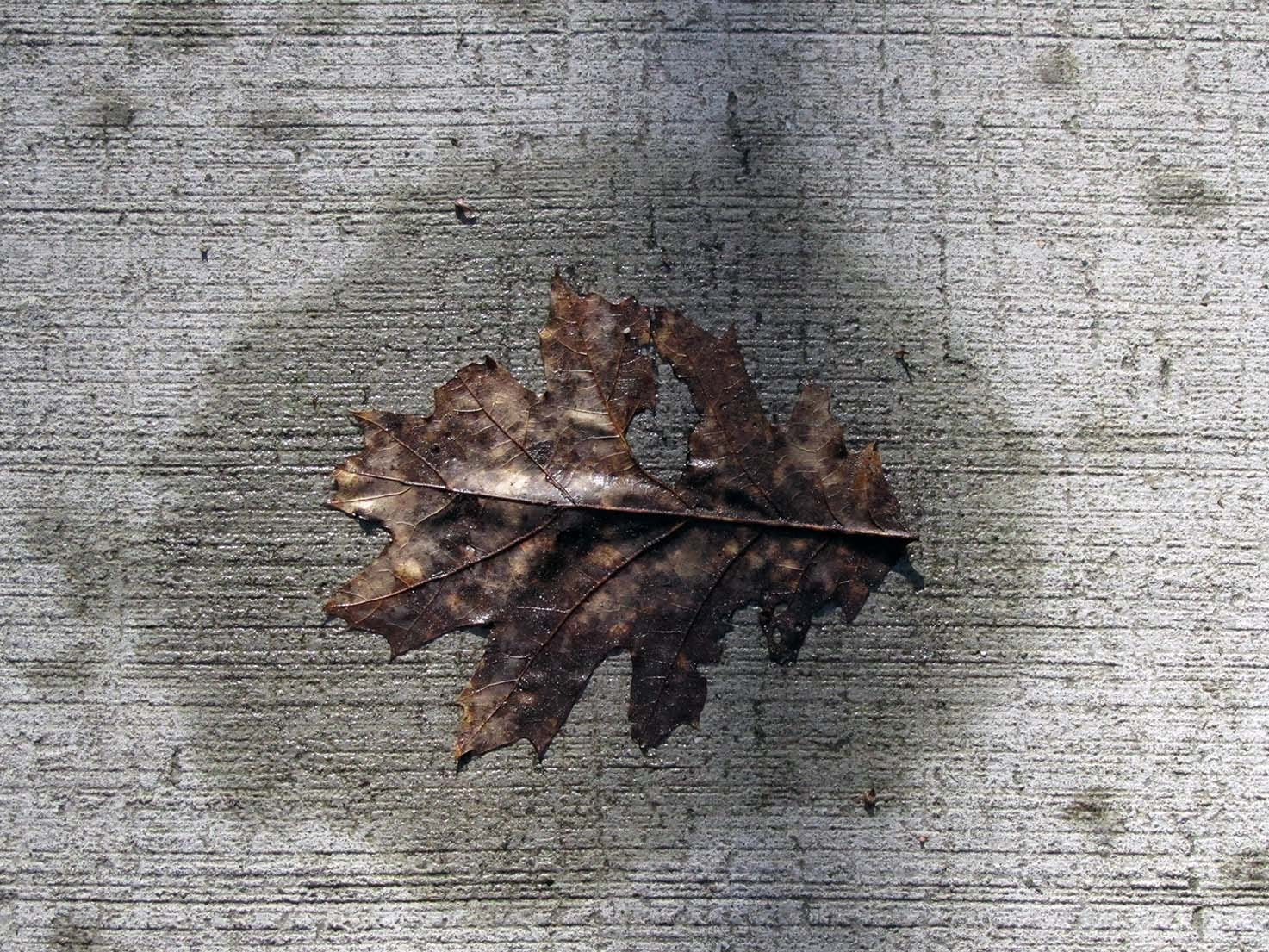 A leaf on a concrete path