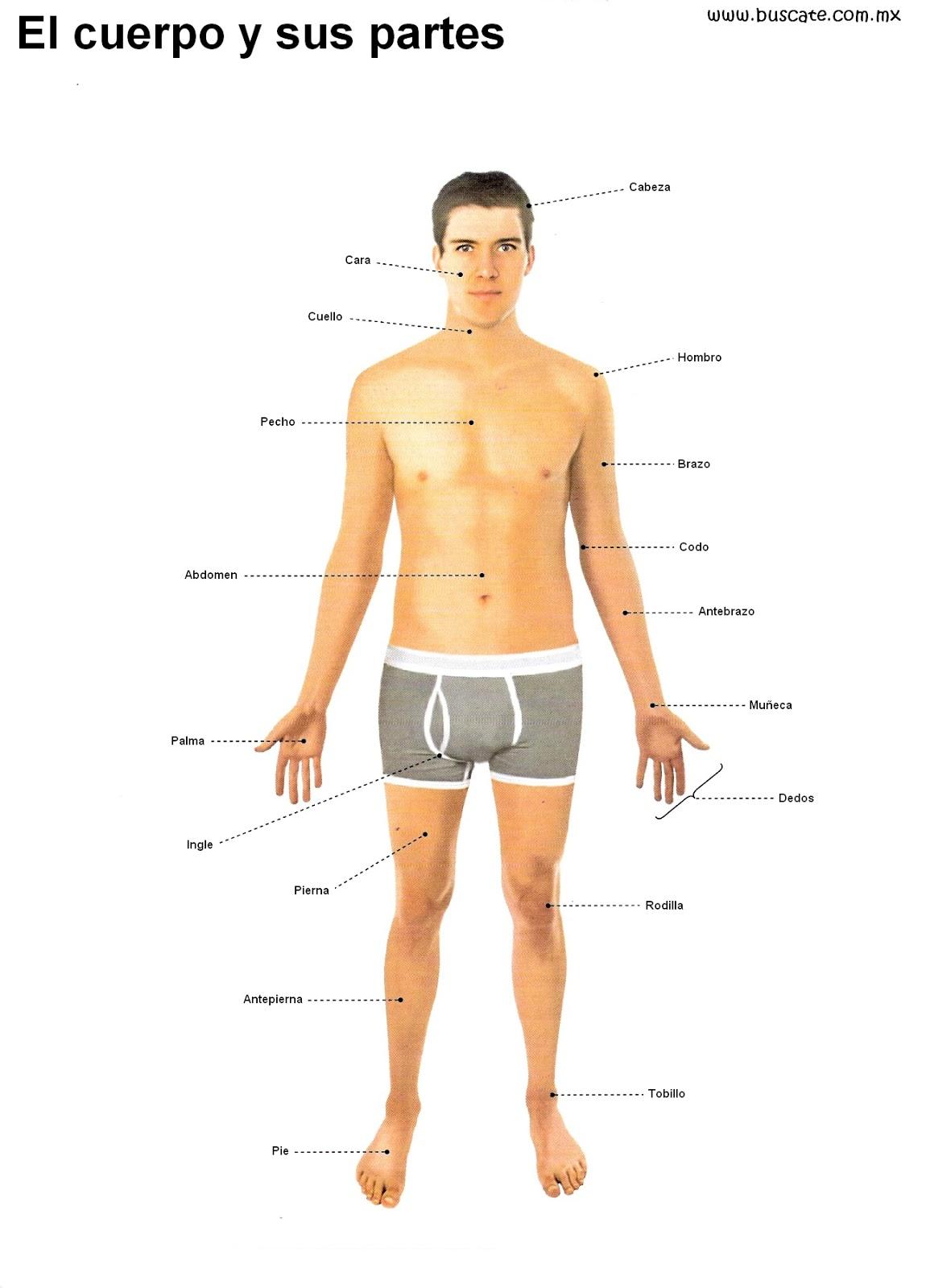 dibujos para colorear de partes del cuerpo humano
